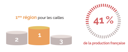 informations-caille